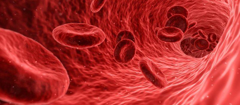Blutkörperchen und Immunsystem des Menschen
